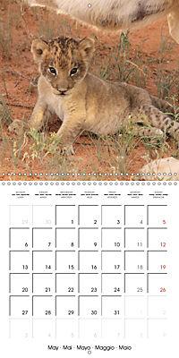 Baby Animals - Lions (Wall Calendar 2019 300 × 300 mm Square) - Produktdetailbild 5