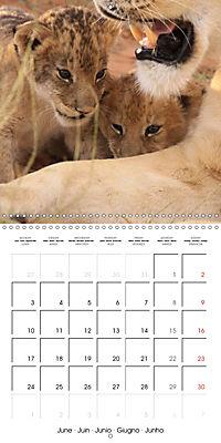 Baby Animals - Lions (Wall Calendar 2019 300 × 300 mm Square) - Produktdetailbild 6