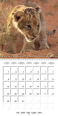 Baby Animals - Lions (Wall Calendar 2019 300 × 300 mm Square) - Produktdetailbild 7