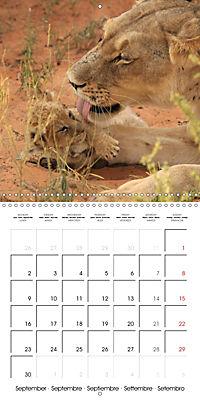 Baby Animals - Lions (Wall Calendar 2019 300 × 300 mm Square) - Produktdetailbild 9