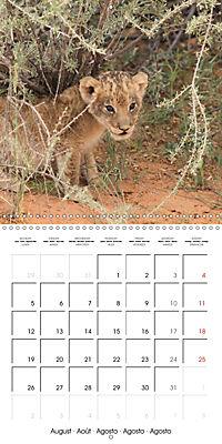 Baby Animals - Lions (Wall Calendar 2019 300 × 300 mm Square) - Produktdetailbild 8