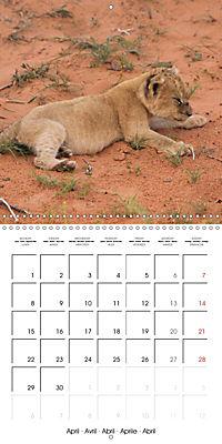 Baby Animals - Lions (Wall Calendar 2019 300 × 300 mm Square) - Produktdetailbild 4