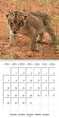 Baby Animals - Lions (Wall Calendar 2019 300 × 300 mm Square) - Produktdetailbild 10