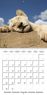 Baby Animals - Lions (Wall Calendar 2019 300 × 300 mm Square) - Produktdetailbild 12