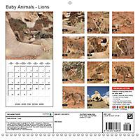 Baby Animals - Lions (Wall Calendar 2019 300 × 300 mm Square) - Produktdetailbild 13