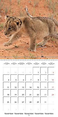 Baby Animals - Lions (Wall Calendar 2019 300 × 300 mm Square) - Produktdetailbild 11