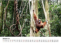 Backpacking Indonesien (Wandkalender 2019 DIN A3 quer) - Produktdetailbild 1