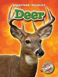 Backyard Wildlife: Deer, Derek Zobel