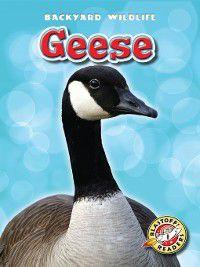 Backyard Wildlife: Geese, Megan Borgert-Spaniol
