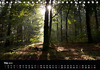 Bad Laer, Kurort am Teutoburger Wald (Tischkalender 2019 DIN A5 quer) - Produktdetailbild 5