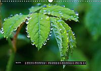 Bäche, Flüsse, Wasserfälle - Eine Schwarzwaldreise (Wandkalender 2019 DIN A3 quer) - Produktdetailbild 5