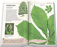 Bäume am Blatt erkennen - Produktdetailbild 1