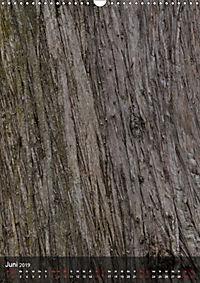 BÄUME DER ERDE - DIE FANTASTISCHE WELT DER RINDE (Wandkalender 2019 DIN A3 hoch) - Produktdetailbild 6