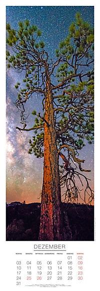 Bäume Panoramakal. 2018 - Produktdetailbild 12