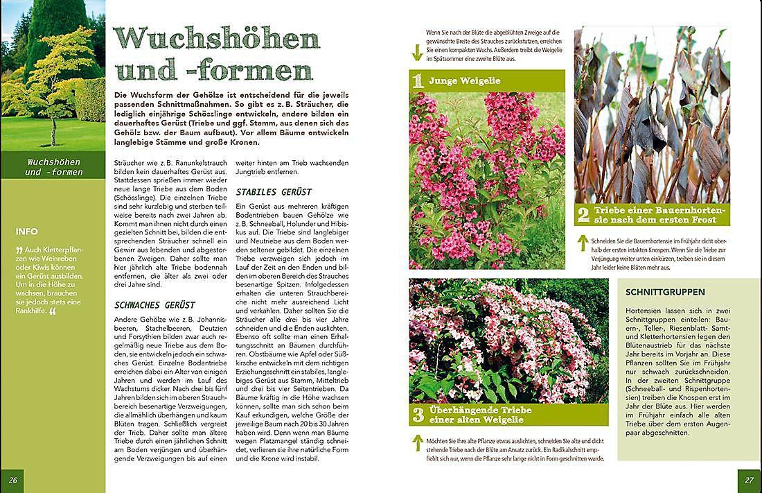Baume Und Straucher Richtig Schneiden Buch Weltbild De