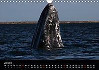 Baja California - Impressionen der mexikanischen Halbinsel (Wandkalender 2019 DIN A4 quer) - Produktdetailbild 7