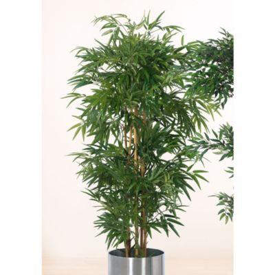 Bambusbaum