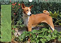 Basenji the African Barkless Dog (Wall Calendar 2019 DIN A4 Landscape) - Produktdetailbild 8
