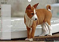 Basenji the African Barkless Dog (Wall Calendar 2019 DIN A4 Landscape) - Produktdetailbild 6