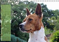 Basenji the African Barkless Dog (Wall Calendar 2019 DIN A4 Landscape) - Produktdetailbild 1