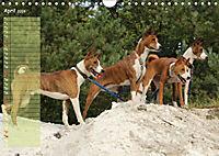 Basenji the African Barkless Dog (Wall Calendar 2019 DIN A4 Landscape) - Produktdetailbild 4