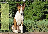 Basenji the African Barkless Dog (Wall Calendar 2019 DIN A4 Landscape) - Produktdetailbild 2
