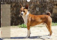 Basenji the African Barkless Dog (Wall Calendar 2019 DIN A4 Landscape) - Produktdetailbild 5