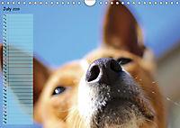 Basenji the African Barkless Dog (Wall Calendar 2019 DIN A4 Landscape) - Produktdetailbild 7
