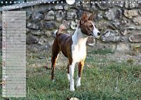 Basenji the African Barkless Dog (Wall Calendar 2019 DIN A4 Landscape) - Produktdetailbild 10