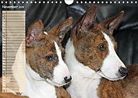 Basenji the African Barkless Dog (Wall Calendar 2019 DIN A4 Landscape) - Produktdetailbild 11