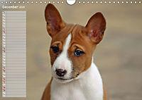 Basenji the African Barkless Dog (Wall Calendar 2019 DIN A4 Landscape) - Produktdetailbild 12
