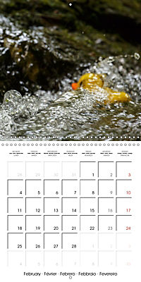 Bath duck Race (Wall Calendar 2019 300 × 300 mm Square) - Produktdetailbild 2