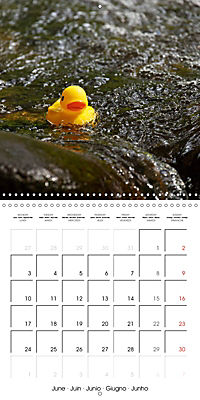 Bath duck Race (Wall Calendar 2019 300 × 300 mm Square) - Produktdetailbild 6