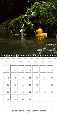 Bath duck Race (Wall Calendar 2019 300 × 300 mm Square) - Produktdetailbild 1