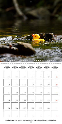 Bath duck Race (Wall Calendar 2019 300 × 300 mm Square) - Produktdetailbild 11