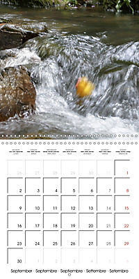 Bath duck Race (Wall Calendar 2019 300 × 300 mm Square) - Produktdetailbild 9