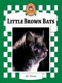 Bats Set 2: Little Brown Bats, Jill C. Wheeler
