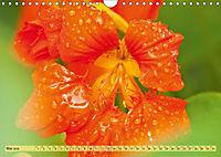 Bauerngarten - bunte Vielfalt (Wandkalender 2019 DIN A4 quer) - Produktdetailbild 5
