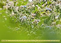 Bauerngarten - bunte Vielfalt (Wandkalender 2019 DIN A4 quer) - Produktdetailbild 11