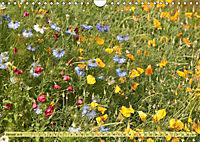Bauerngarten - bunte Vielfalt (Wandkalender 2019 DIN A4 quer) - Produktdetailbild 1