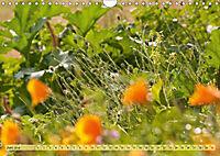 Bauerngarten - bunte Vielfalt (Wandkalender 2019 DIN A4 quer) - Produktdetailbild 6