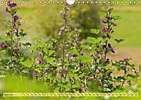 Bauerngarten - bunte Vielfalt (Wandkalender 2019 DIN A4 quer) - Produktdetailbild 4
