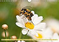 Bauerngarten - bunte Vielfalt (Wandkalender 2019 DIN A4 quer) - Produktdetailbild 7
