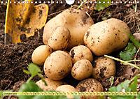 Bauerngarten - bunte Vielfalt (Wandkalender 2019 DIN A4 quer) - Produktdetailbild 10