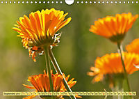 Bauerngarten - bunte Vielfalt (Wandkalender 2019 DIN A4 quer) - Produktdetailbild 9
