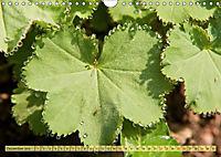 Bauerngarten - bunte Vielfalt (Wandkalender 2019 DIN A4 quer) - Produktdetailbild 12