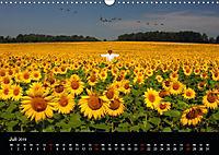 BAUERNSCHLAU 2019 (Wandkalender 2019 DIN A3 quer) - Produktdetailbild 7