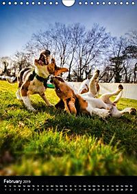 Beagles in action (Wall Calendar 2019 DIN A4 Portrait) - Produktdetailbild 2