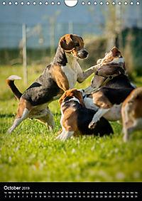 Beagles in action (Wall Calendar 2019 DIN A4 Portrait) - Produktdetailbild 10
