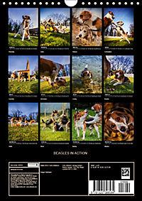 Beagles in action (Wall Calendar 2019 DIN A4 Portrait) - Produktdetailbild 13